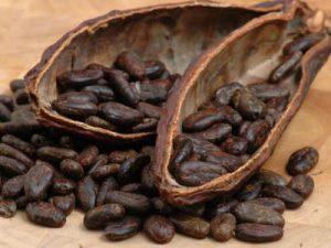 uma imagem sobre semente de cacau